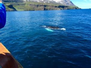 Norðursigling, Húsavík, Iceland